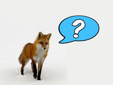 what-the-fox-says